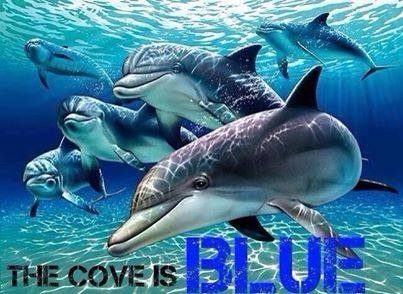 The Cove is BLUE